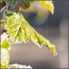 MM - Erster Frost in Weißbach