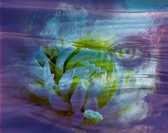 Cherche regard neuf sur les choses Cherche iris qui n'a pas vu la rose