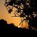 Algarve sunrise