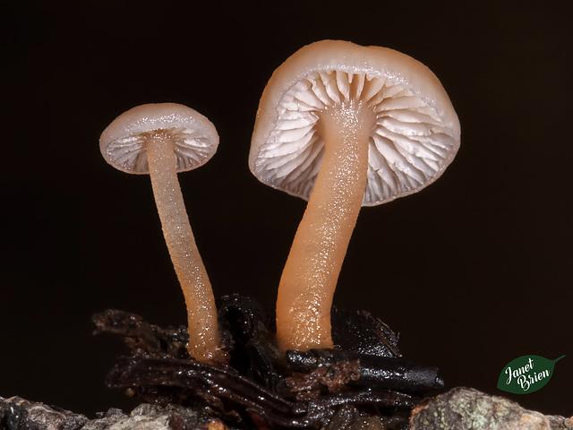 80/366: Moist Mushrooms