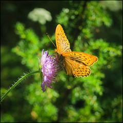 summer, flowers and butterflies