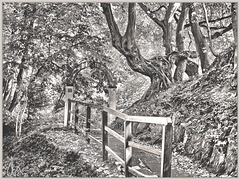 Waldweg BW