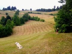 One summer landscape for a little game