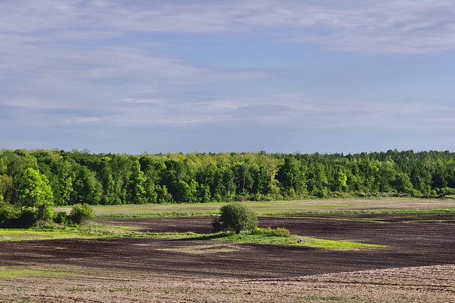 P1010593-st-raphael-field
