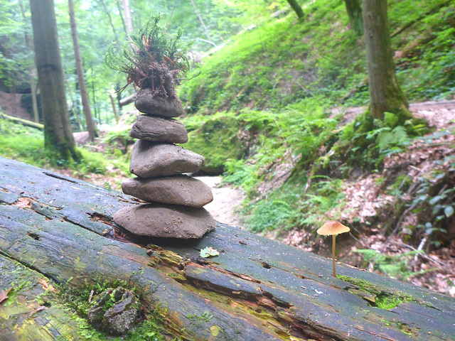 Wanderung Uttewalder Grund - Juli 2017
