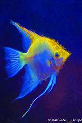 Angel Fish, Florida Aquarium - Topaz Impressionistic Swirley Strokes II