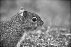 50 shades of.........Grey Squirrel.