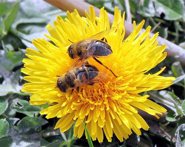 Gemeinsame Pollensuche