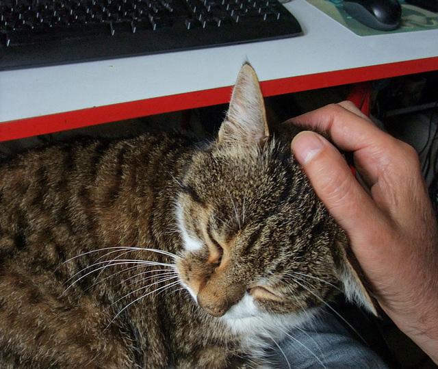 Écriture handicap (chat)