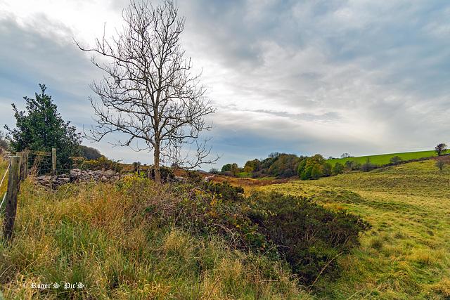 Mendip Hills Autumn HFF