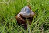 Slug love... is in the air...