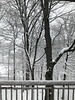 Spring snow ... view from my living room