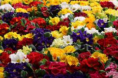 1T0A7167 La foire aux fleurs