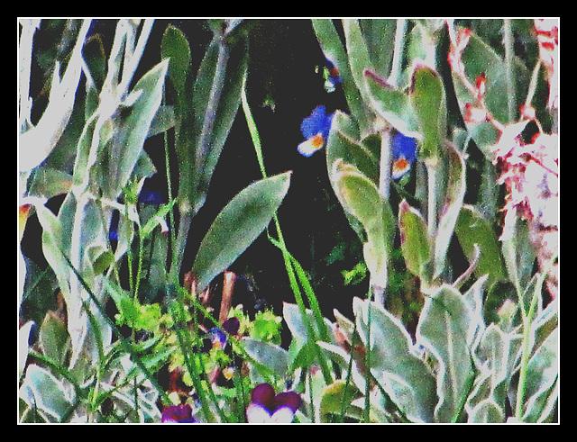 Just Plants.