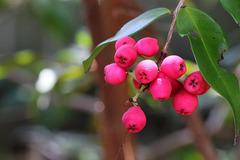 363/365 berries