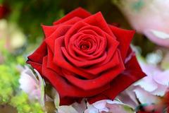 4e Festival des roses à Estavayer-le-Lac ...