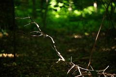ich ging im Wald so vor mich hin ...