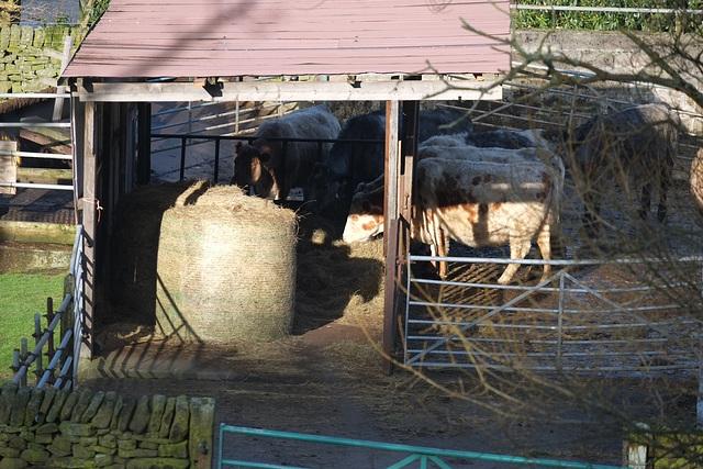 Mossy Lea Farm, Glossop