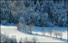 Souvenir de la neige....  HFF To All