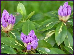 ** Dans mon jardin en mai **