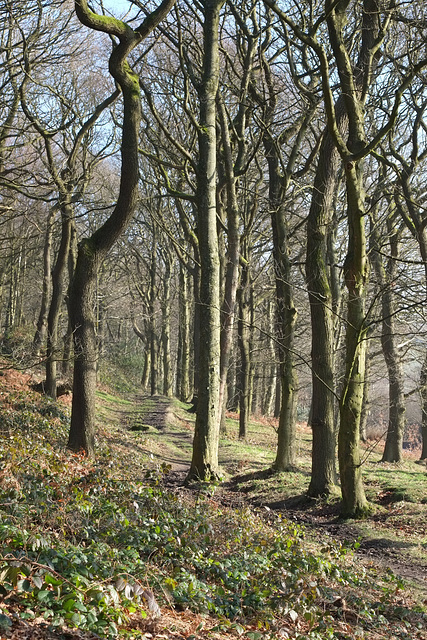 Shire Hill Wood path by the Snake Pass
