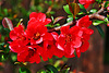 3 (14)...austria flower