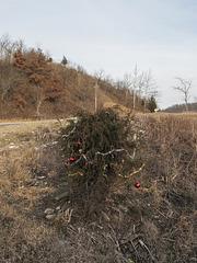 Rural roadside Christmas juniper.