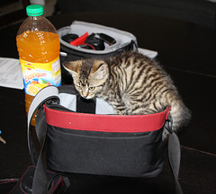 un petit chat adopté chez mon fils