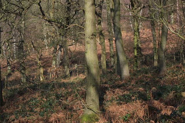 Shire Hill Wood
