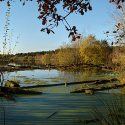 Blakemere Moss in Autumn