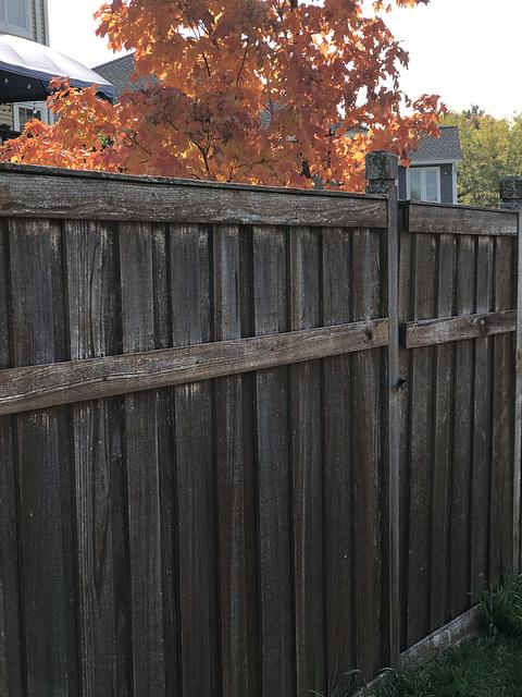 fence, autumn