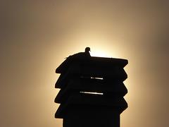 silhouette al tramonto