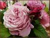 ** Roses du jardin **