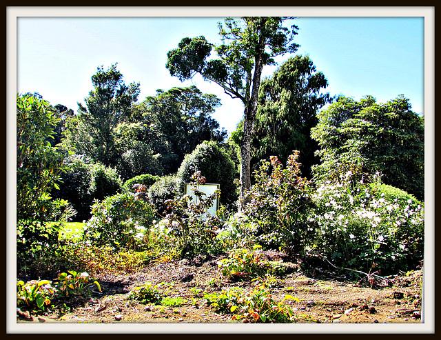 Botanical Beauty.