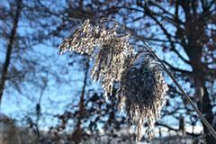 Winterimpression - Die Schönheit der kleinen Dinge