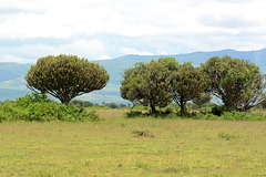 Ugandan Savannah in Queen Elizabeth National Park
