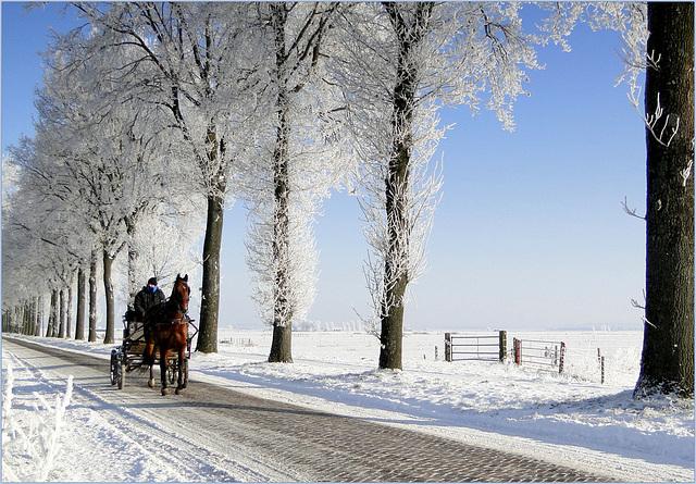 HFF: Enjoying the Dutch Winter...