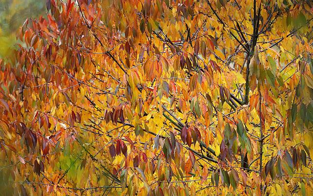 Plumage d'automne.... :-)