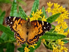 6065278 DxOdL · Butterfly