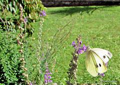 My Garden Visitor.
