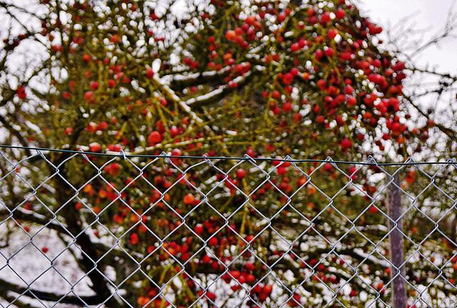 Winter Bokeh - HFF