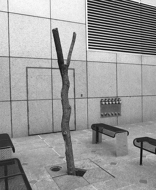 Landscaping At The Ronald Reagan Building (0321)