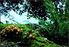 Moss hill