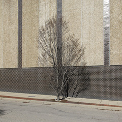 This tree is IMPORTANT TO THE HAPPINESS of any person within sight of this wall.