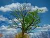1 (34)...austria lonly tree