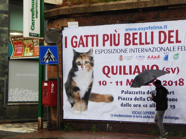 calico cat & rain