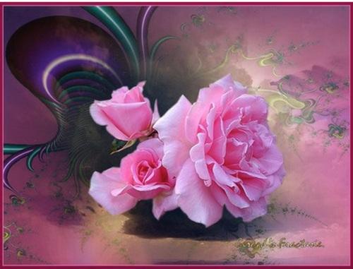 Roses de Kali