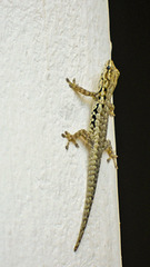 Dear, we have a reptile on the wall.