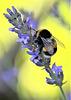 Tout est fleur aujourd'hui, Tout sera miel demain.......
