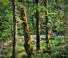 A View of Little Qualicum River Through Moss-Covered Trees! (Set 2 of 2) (+6 insets)